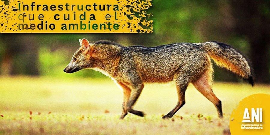 Medidas de protección para animales silvestres en vías del país